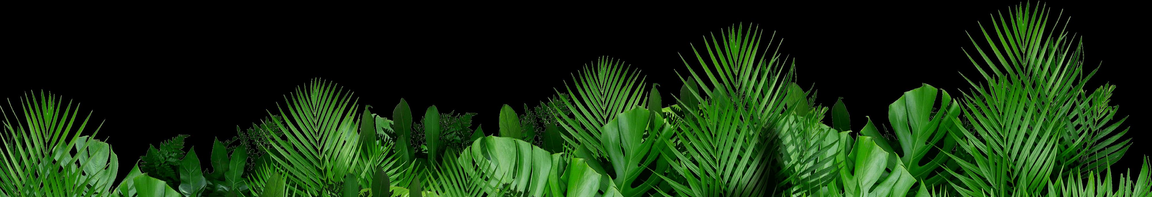feuilles-bas